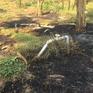 Cháy rụi gần 1.000 trụ thanh long trong trang trại