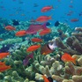 Các rạn san hô có thể biến mất trong 20 năm tới