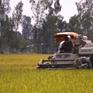 Nông nghiệp giảm thiệt hại nhờ chủ động ứng phó hạn, mặn