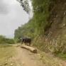 Lần theo dấu vết lâm tặc ở rừng tự nhiên Khe Giáo, Yên Bái