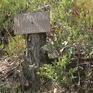 Lâm Đồng: Ngang nhiên phá rừng thông, bán đất