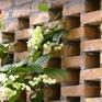 Nhịp sống đô thị: Quy chuẩn nhà chung cư 25m2 và mẫu nhà sống xanh