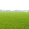 Nhiều giải pháp đảm bảo thắng lợi vụ lúa Đông Xuân
