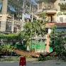 Sau vụ cây phượng đổ đè vào học sinh, Hà Nội rà soát cây lâu năm trong gần 2.000 trường
