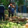 Vụ cây phượng đổ làm chết học sinh: Sở GD&ĐT TP.HCM ra công văn khẩn