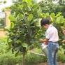 Quỹ 1 triệu cây xanh cho Việt Nam sắp chạm đích