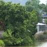 Hơn 200 hộ dân bất an khi sống cạnh hồ thủy lợi xuống cấp nguy hiểm