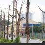 """Tin nóng đầu ngày 15/8: Hàng trăm cây xanh tiếp tục """"đột tử"""" trên con đường mới mở ở Hà Nội"""