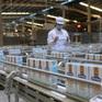Doanh thu nội địa và xuất khẩu 6 tháng đầu năm của Vinamilk tăng trưởng 2 con số