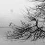 Chùm ảnh: Hồ Gươm mờ ảo trong một ngày mù sương