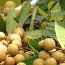 Gỡ khó cho nông sản Việt Nam xuất khẩu sang Trung Quốc