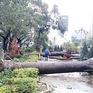 Hiện tượng La Nina quay trở lại, gây bão dồn dập từ nay đến cuối năm