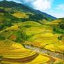 Mãn nhãn cảnh đẹp hùng vĩ của mùa vàng Mù Cang Chải