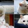 """Mèo trở thành """"ngôi sao mạng xã hội"""" vì loạt ảnh """"tự sướng"""" bằng iPad"""