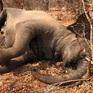 12 con voi chết chưa rõ nguyên nhân tại Zimbabwe