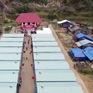 Chung tay xây dựng nhà mới cho người dân vùng lũ trước Tết Nguyên đán