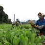 Hà Nội phấn đấu thu nhập của nông dân đạt 80 triệu đồng/người/năm vào 2025