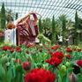 Lễ hội hoa tulip trở lại với nhiều bất ngờ tại Gardens by the Bay