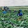 """Chính phủ chỉ đạo """"giải cứu"""" nông sản bị ảnh hưởng vì dịch COVID-19"""