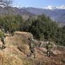 Quân đội Ấn Độ - Pakistan nhất trí ngừng các cuộc giao tranh