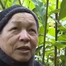 Đảng viên dân tộc H'Mông đi đầu trong phát triển kinh tế