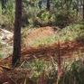Phạt 40 triệu với đối tượng lấn chiếm đất rừng phòng hộ ở Lâm Đồng