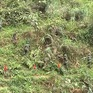 Hà Giang rà phá bom mìn để trả lại màu xanh cho đất