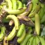 Australia nguy cơ đứng trước một cuộc khủng hoảng lương thực