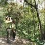 Lên kế hoạch đánh sập các hầm vàng trái phép tại Vườn quốc gia Sông Thanh