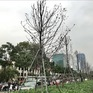 Cây xanh ở Thủ đô Hà Nội: Không thể cứ thích là trồng