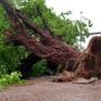 Cây ngã đổ, nước tràn nhà dân sau cơn mưa lớn trái mùa ở TP Hồ Chí Minh