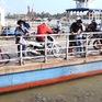 Đàn cá sông tự nhiên về trú ngụ bên bờ cù lao ở Đồng Tháp