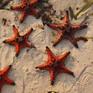 """Sao biển Phú Quốc chết khô vì du khách """"sống ảo"""""""