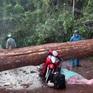 Lốc xoáy quật đổ cây rừng, đè trúng 2 phụ nữ
