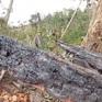 Nóng tình trạng đốt phá rừng làm nương rẫy tại Kon Tum