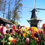 Choáng ngợp trước hàng triệu bông tulip vào mùa nở rộ ở Hà Lan