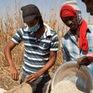 Khủng hoảng lương thực toàn cầu ngày càng trầm trọng