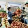 Bắc Giang đã bán được hơn 150.000 tấn vải thiều