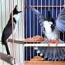 Tháng hành động vì môi trường suy nghĩ về thú chơi chim cảnh