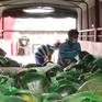 """Tiền Giang mở """"luồng xanh"""" chuyển hàng hóa nông sản về TP Hồ Chí Minh"""