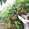 Nhiều giải pháp khơi thông đầu ra cho nông sản ĐBSCL