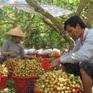 Gỡ vướng tiêu thụ nông sản cho khu vực phía Nam