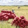 Bộ NN-PTNT đề xuất thu mua dự trữ lúa gạo quốc gia
