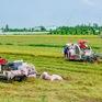 Doanh nghiệp gặp khó trong việc tăng thu mua lúa cho dân