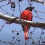 Về đâu những cánh chim trời: Khám phá thế giới các loài chim