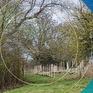 Chính phủ Anh đầu tư 15 triệu Bảng trồng mới 50 triệu cây xanh