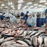 Hàng trăm tấn cá tra nằm ao, chấp nhận bán lỗ vẫn không ai mua